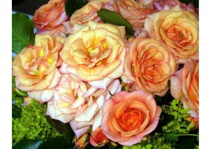 "Rose ""Bentheimer Gold"""